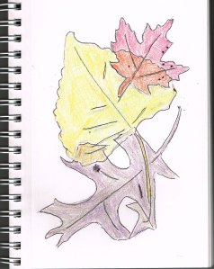 fall leaves sketch
